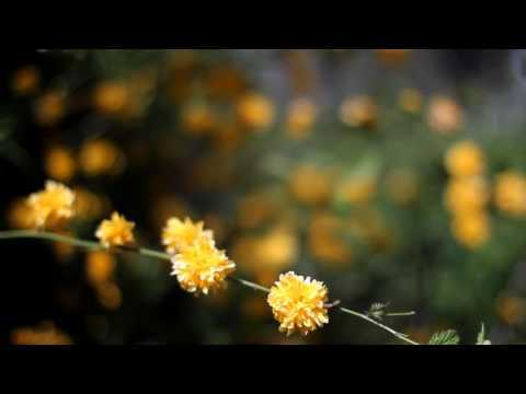 """Beautiful Yellow Flowers In Garden HD Video Footage. The video clip is permitted for non-commercial use under license """"Attribution-NonCommercial 4.0 International (CC BY-NC 4.0)"""""""