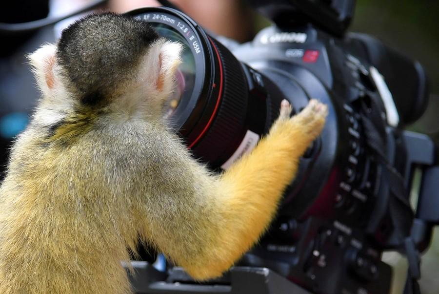 macaco-camera.jpg