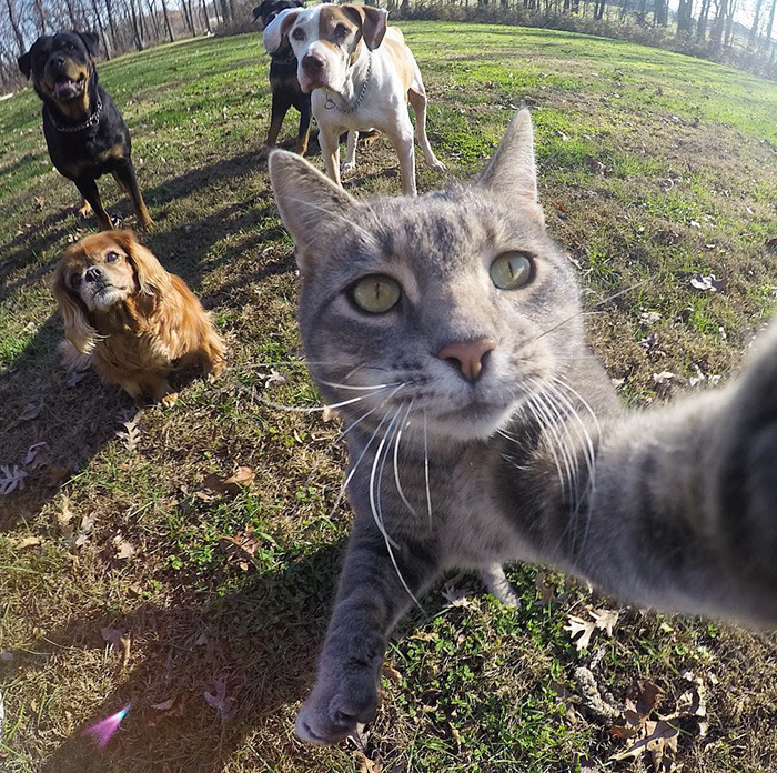 """""""This cat is taking better selfies than you do."""""""