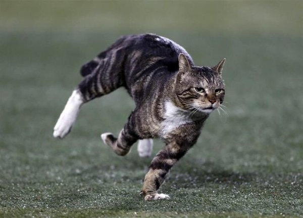 """Yesterday a cat ran onto the field at Yokohama Stadium, and the sports photographers' photos of the cat are beautifully dynamic."" —@mombot"