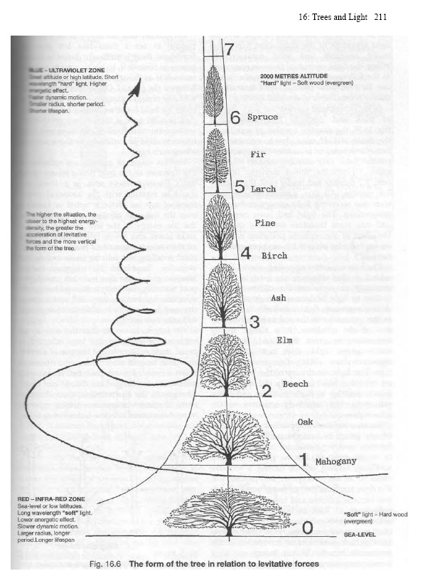 fig-16.6-the-form-of-the-tree-in-relation-to-levitative-forces.jpg