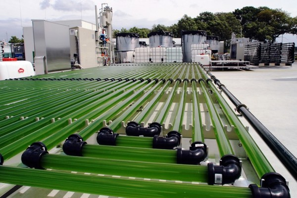 nature-s-untapped-resource-how-far-can-algae-go_wrbm_large.jpg