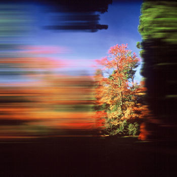 101_westonbirt_arboretum_ii_350px.jpg