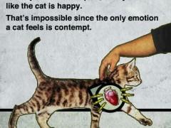 why-do-cats-purr-240x180.jpg