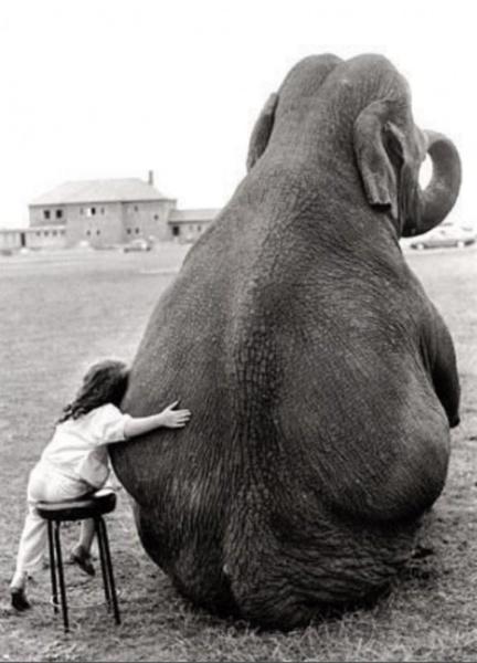 love-for-animals-photos-7.jpg