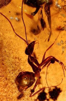 ant-in-amber.jpg