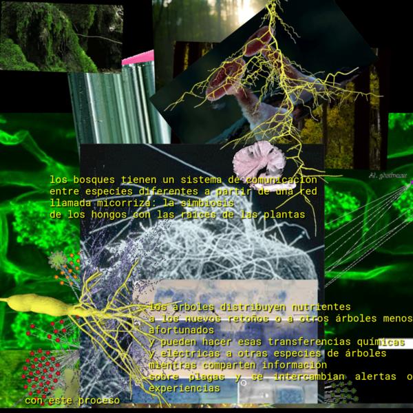 los bosques tienen un sistema de comunicación entre especies diferentes a partir de una red llamada micorriza: la simbiosis de los hongos con las raíces de las plantas