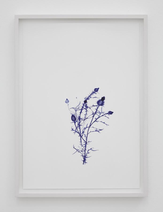 2017 Ballpoint on Hahnemühle paper unique 46 × 34 cm.