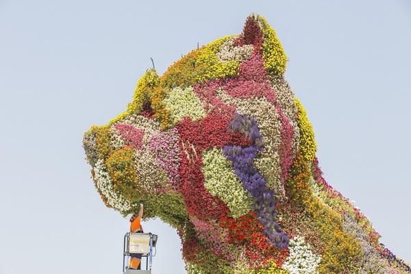 gardener-guggenheim-flower-puppy.jpg