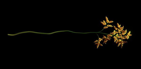 002_flower-1020x499.jpg
