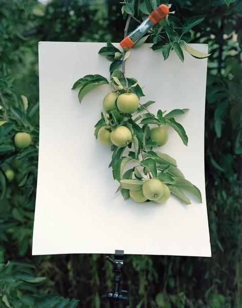 Yola Monakhov Stockton, Of how terrible orange is, 2010.