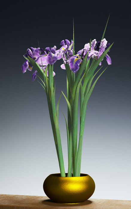 Flowers (Irises)