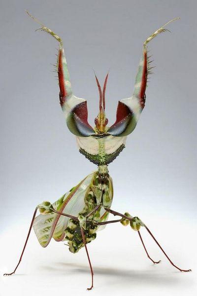 d1839a700e9d16c2c0ebc2ef1685d3a2-praying-mantis-beautiful-bugs.jpg
