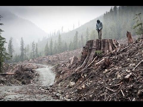 IF A TREE FALLS 2011