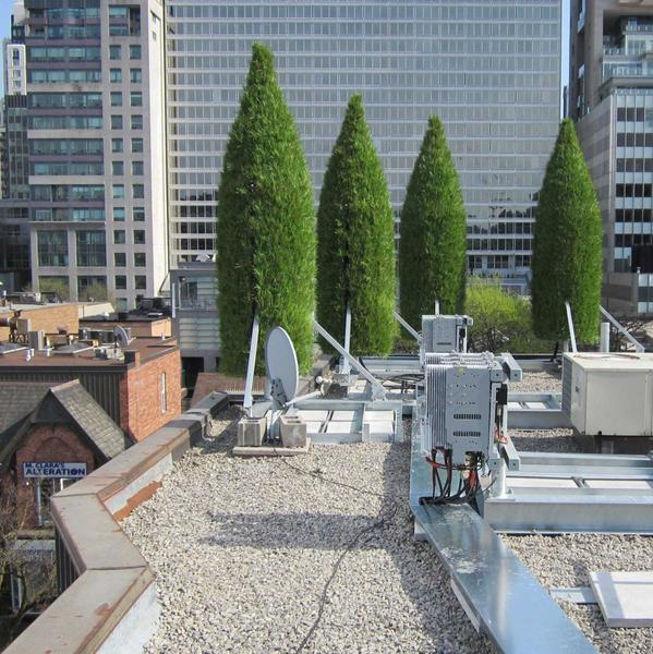 italian-cypress_rooftop_concealment_cellular_bell-canada_001.jpg