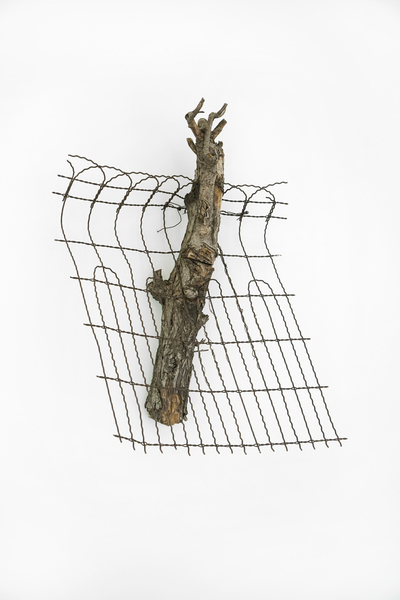 Charles Harlan, Tree, 2015