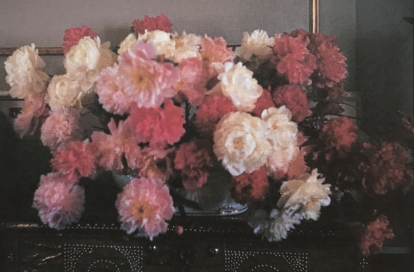 Tureen on Farah's chest with white, pink and red peonies—adapted from monet