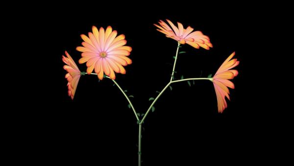 Jennifer Steinkamp, Dance Hall Girl 3 (daisies), 2004