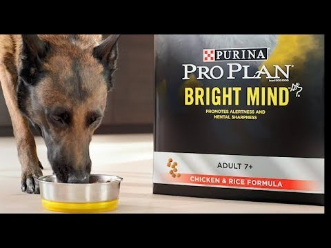 Breakthrough Nutrition for Senior Dogs | Purina® Pro Plan® Bright Mind® 7+