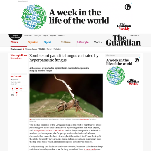 Ant colonies are protected against brain-manipulating parasitic fungi by another fungus