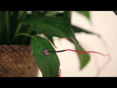 Plant Sounds