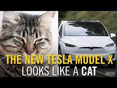 Elon Musk's Model X is finally hitting the streets... and it looks like a cat. We found eight examples to prove it.