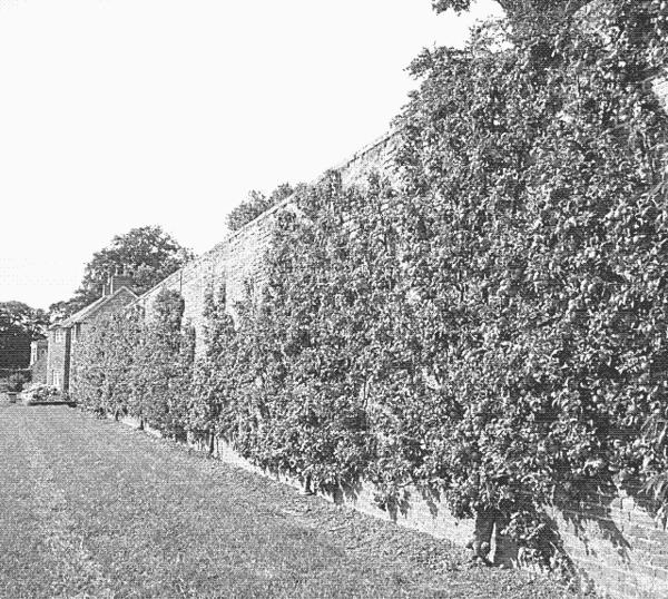 english-fruit-wall.png