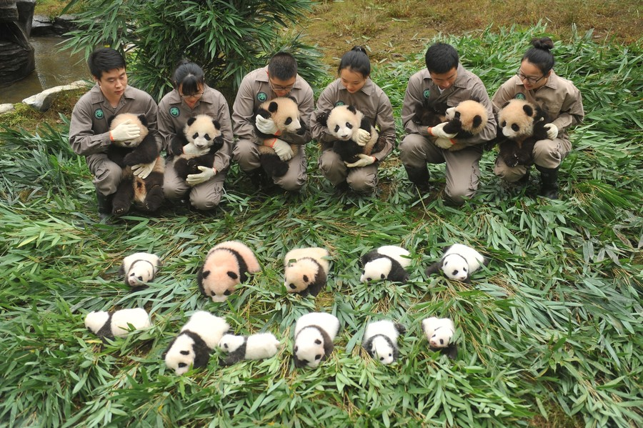 china-animal-conservation-panda-000-tc7hl-str-afp.jpg