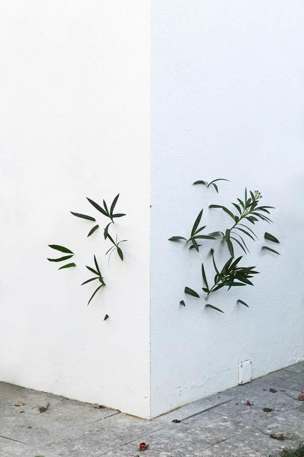 plantaparet