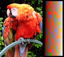 screen_color_test_vga_256colors.png