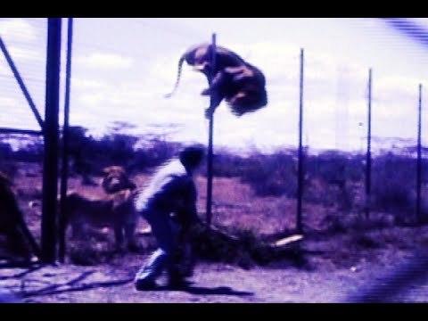 LIONS vs. RHYTHMATIST by Stewart Copeland