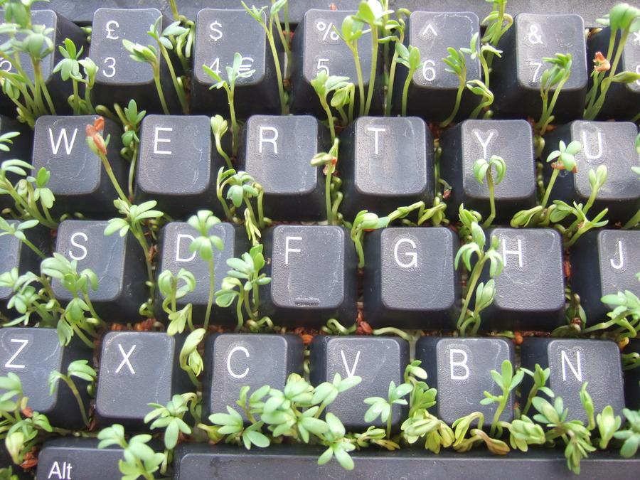 Cress_keyboard-3_sprouting_top.jpg