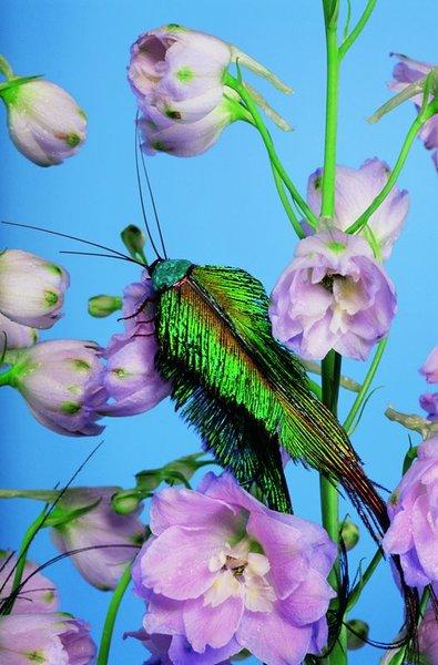 02-birds-of-paradise.jpg