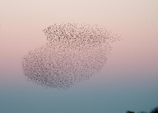laurel-schwulst-flock.png