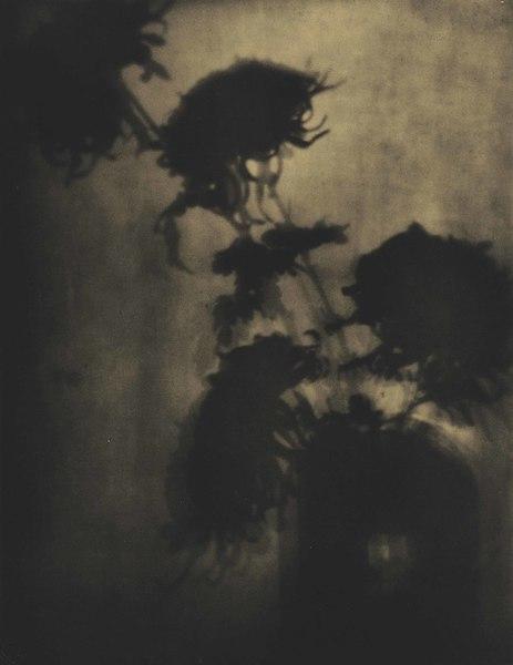 ADOLPH DE MEYER (1868-1946) The Shadows on the Wall, Chrysanthemums, c. 1907  bromoil print