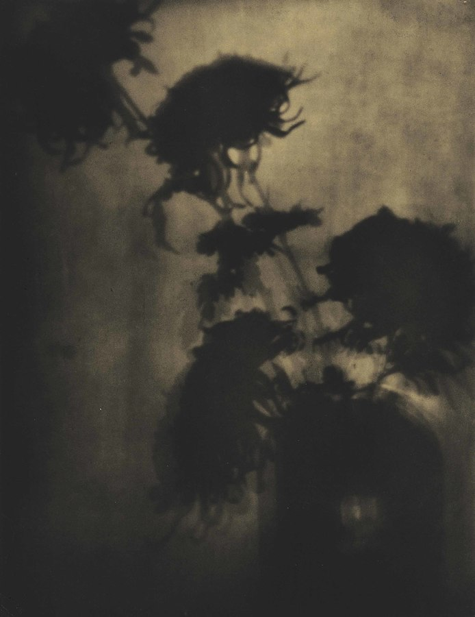 Adolph De Meyer, The Shadows on the Wall, Chrysanthemums, 1907