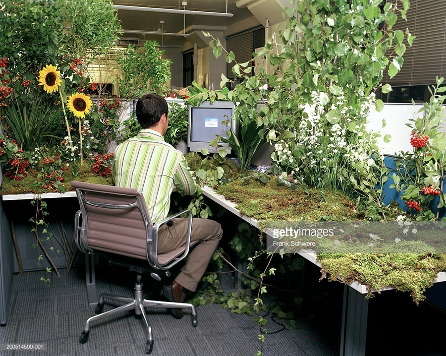 office-worker-at-desk-covered-in-plants-and-flowers-rear-view-picture-id200514500-001