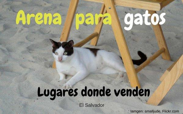 arena-para-gatos-el-salvador.jpg