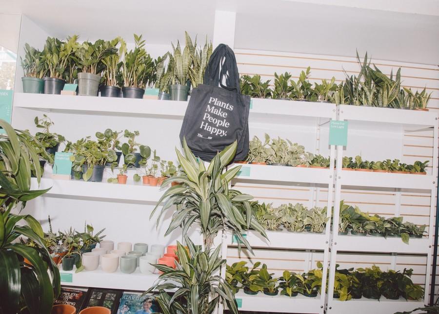 #plantfluencers