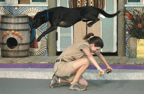 Animal_Trainer/Companionship_Biology.jpg