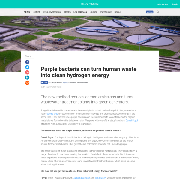 Purple bacteria can turn human waste into clean hydrogen energy
