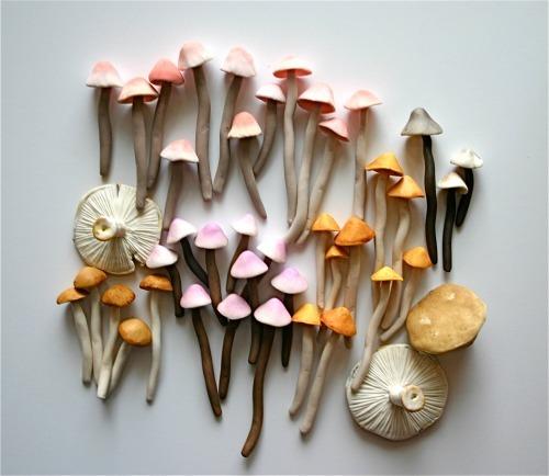 mushrooms pink
