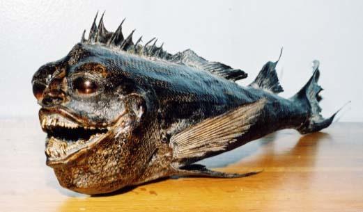 Ancient Fish (2003)