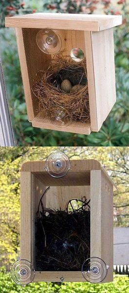 birdhouse-attached-to-window-78-ideas-about-window-bird-feeders-on-pinterest-bird-feeders-3.jpg