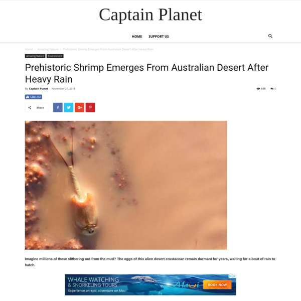 Prehistoric Shrimp Emerges From Australian Desert After Heavy Rain