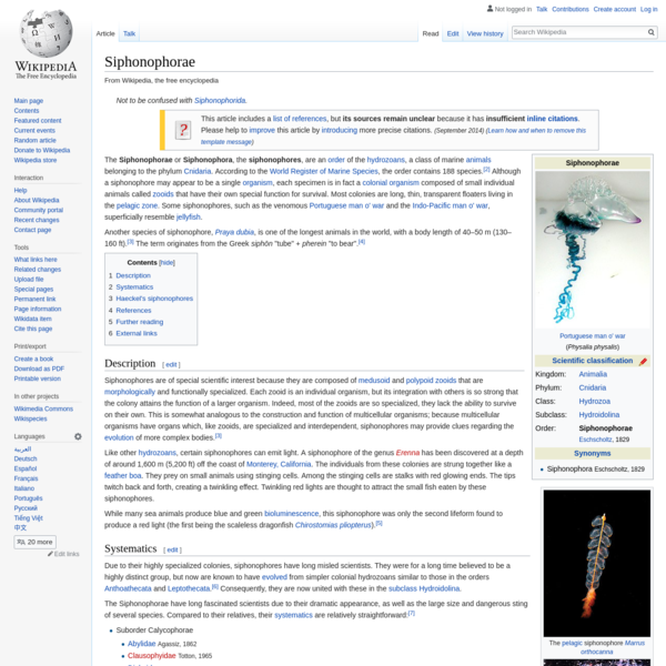Siphonophorae - Wikipedia
