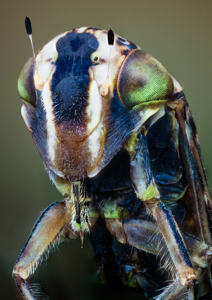 macro-insects-hq-john-hallmen-10.jpg
