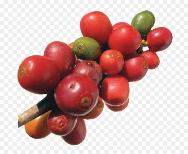 kisspng-robusta-coffee-frutti-di-bosco-arabica-coffee-coff-coffee-beans-5a74463f83bb65.8199020515175695995396.jpg
