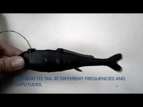 Mormyrus rume, Robotic Dummy Fish