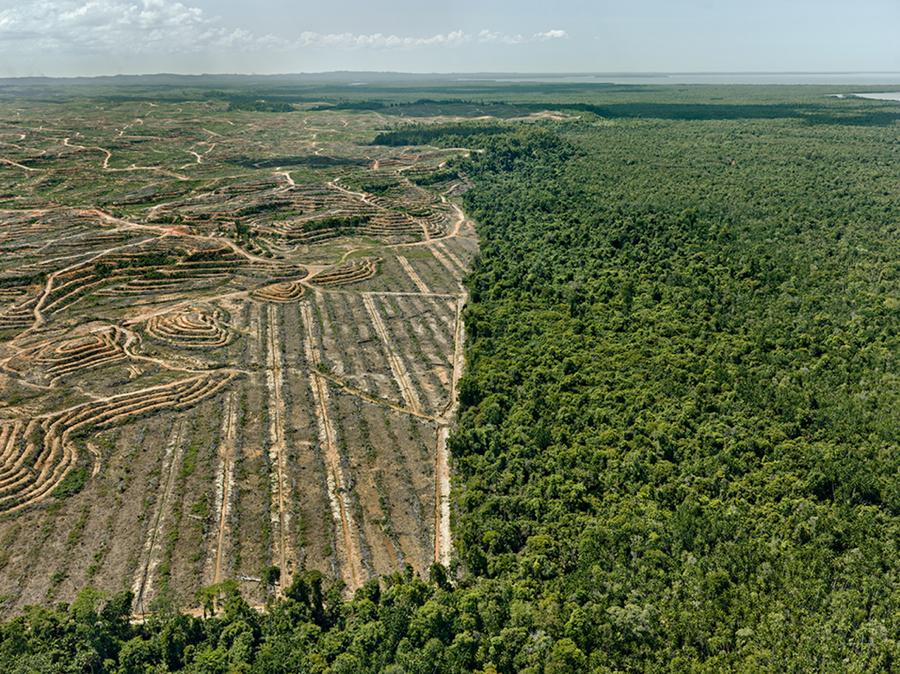 clearcut-1-palm-oil-plantation-borneo-malaysia-2016-1080x809.jpg
